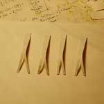 Обклеенные кавликулы